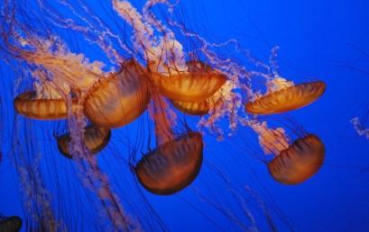 Der Ozean der Zukunft – zu warm, zu hoch, zu sauer