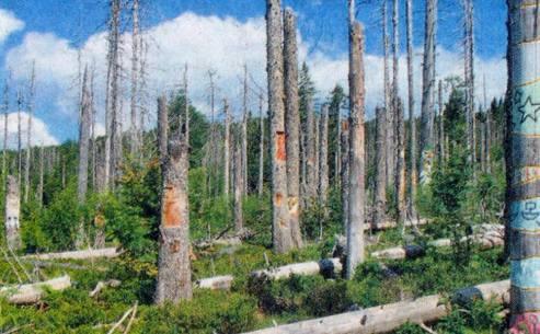 Vom Wald zur Wildnis