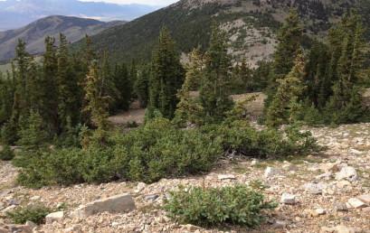 Warum gibt es Waldgrenzen? Eine einfache biologische Erklärung für ein globales Phänomen