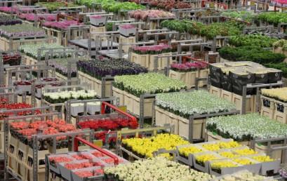 Niederlande – Europäische Städtekultur und globale Wirtschaftsnetze. Wie ein flaches Land und seine Städte die Weltwirtschaft präg(t)en