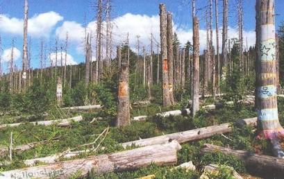 Wenn der Wald zur Wildnis wird