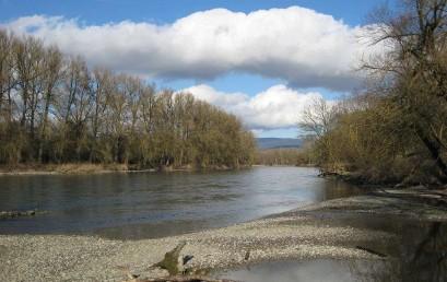 Donau – Aktuelle Trends und Entwicklungen aus Gewässerökologischer Sicht