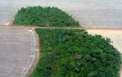 Der tropische Regenwald zwischen Raubbau und Konservierung – Westafrika und Brasilien im Vergleich