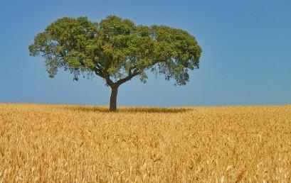 Portugal – Melancholie und Aufbruch im Südwesten der EU