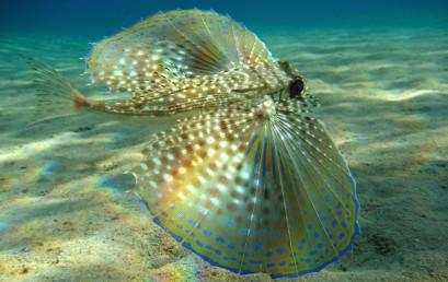 Die Meeresfauna des Mediterrans – die Faszinierendste Region der Welt?