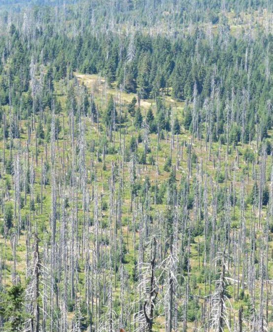 Prinzipien der Urwaldentwicklung: Was lernen wir vom Nationalpark Bayerischer Wald?