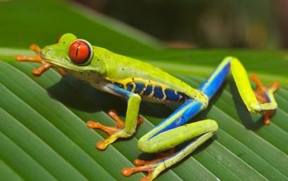 Umweltgefährdung und Umweltsicherung in Zentralamerika