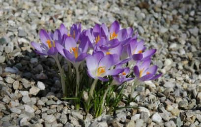"""Die """"Gunst der Fuge"""": Eine regionalbotanische Betrachtung zu Pflanzen an allen möglichen und unmöglichen Orten"""