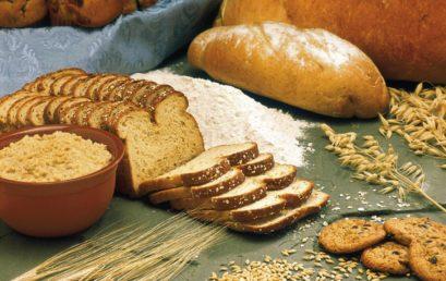 Vom Korn zum Brot – Wie funktioniert Ökolandbau, was passiert in der Mühle und wie entstehen daraus Bio-Backwaren?