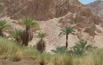 Oasen der Sahara – Naturraumausstattung und Nutzungspotentiale