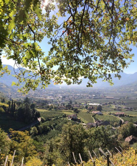 Südtirol – Wirtschaftliche Dynamik und kulturelle Vielfalt auf der Sonnenseite der Alpen