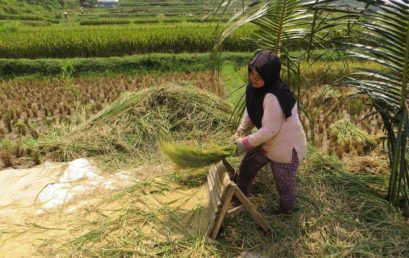 Biolandwirtschaft in Indonesien? Die Herausforderungen gesellschaftlicher Transformation